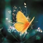 Картина за инфрачервен панел за отопление размер М 60х90 см Пеперудата (S)