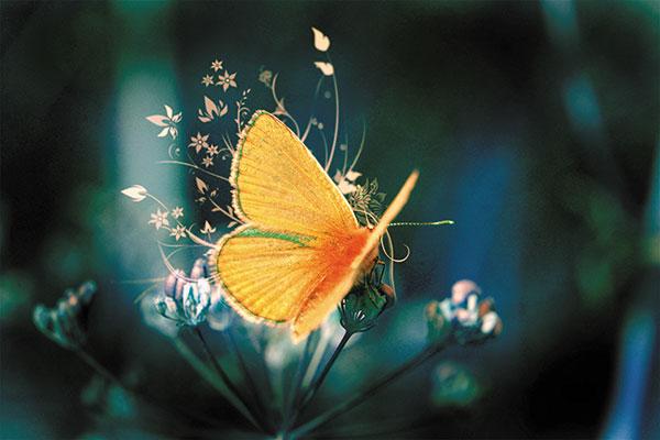 Картина за инфрачервен панел за отопление размер M 60х90 см Пеперудата (М)