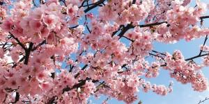 Картина за инфрачервен панел за отопление размер L 60х120 см Ухае ми на пролет (L)
