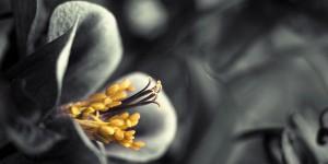 Картина за инфрачервен панел за отопление размер L 60х120 см Черно-бяло цвете (L)