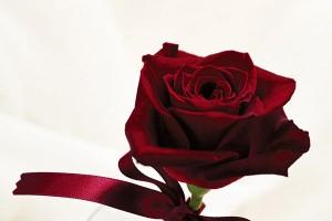 Картина за инфрачервен панел за отопление размер M 60х90 см Роза на бял фон (M)