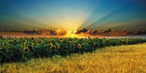 Картина за инфрачервен панел за отопление размер L 60х120 см Слънчо и глед (L)