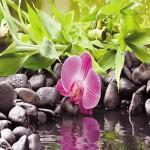 Картина за инфрачервен панел за отопление размер S 60х60 см Орхидея на камани (S)