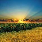 Картина за инфрачервен панел за отопление размер S 60х60 см Слънчо и глед (S)