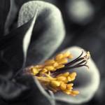Картина за инфрачервен панел за отопление размер L 60х60 см Черно-бяло цвете (s)